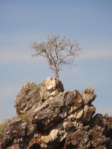 tree-on-rock-1156779-639x852