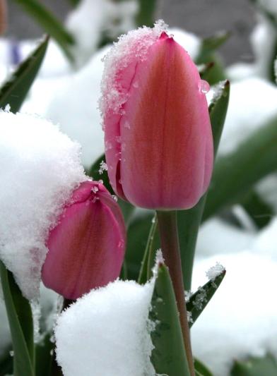 spring-storm-1409025-639x869